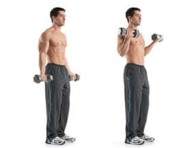 Biceps And Arms Exercises