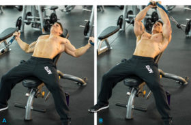 Chest Muscle Exercises
